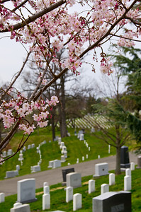 Arlington National Cemetery - Cherry Blossom