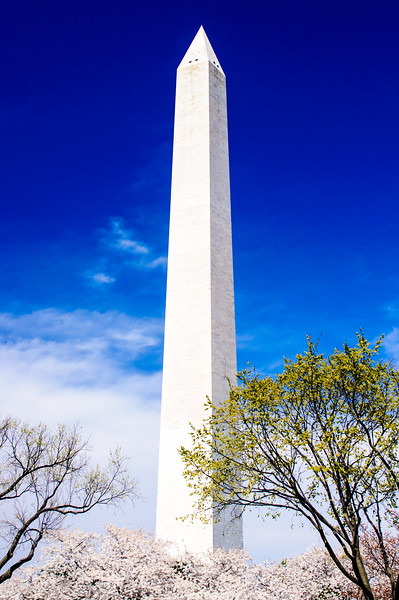 Washington Monument - Close up with cherry blossoms.