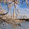 Washington Monument - Sea gulls on the tidal basin with the Washington Monument in the background.