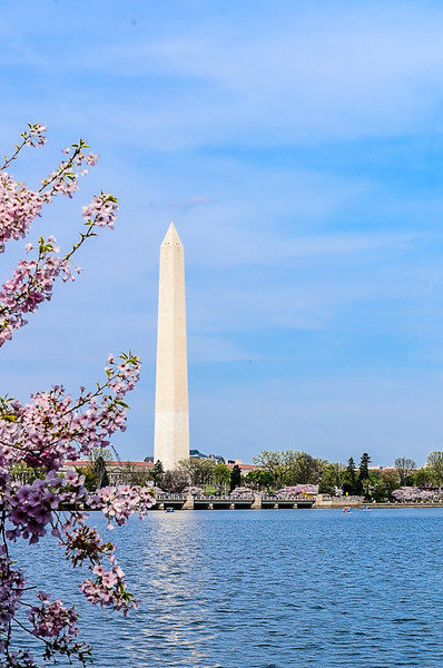 Washington Monument - View from the Tidal Basin with blooming cherry trees.