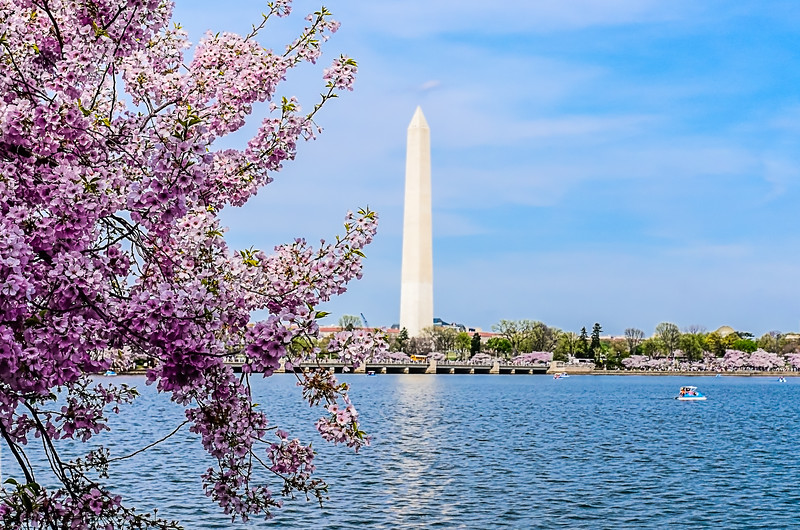 Washington Monument - During the Cherry Blossom Festival, there are spectacular views of the Washington Monument from the Tidal Basin.