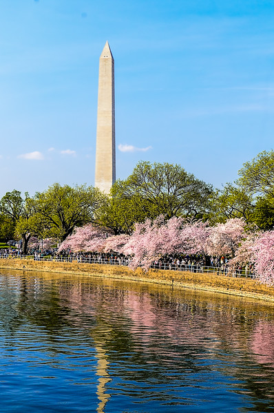 Washington Monument - Monument on a warm, bright sunny day with the cherry trees in full bloom.