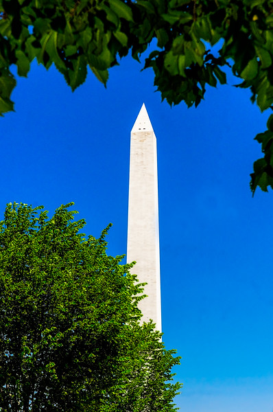 Washington Monument - View of the Monumentin a deep blue sky framed by trees.