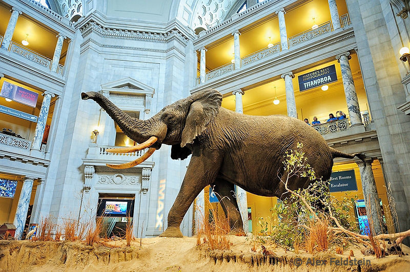 Elephant at the entrance to the Museum of Natural History
