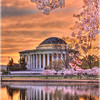 Cherry Blossom Sunrise at the Jefferson Memorial