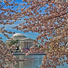 Jefferson Memorial with Cherry Blossoms..
