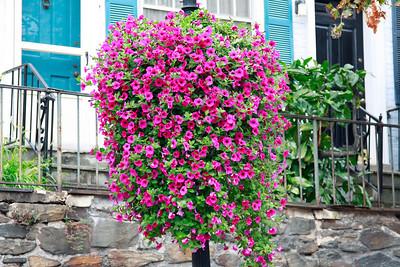 Georgetown hanging pots