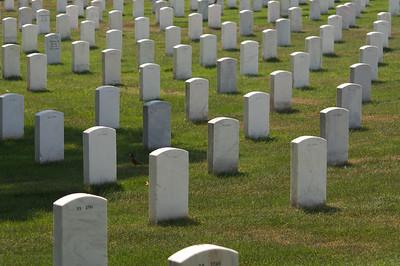 Graves at Arlington Cemetery