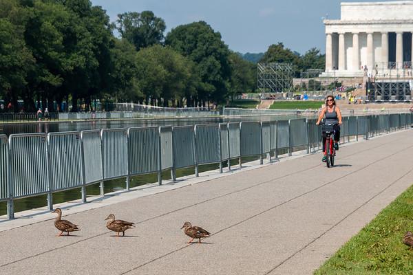 Duck Crosswalk