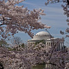 Jefferson Memorial with Cherry Blossoms.