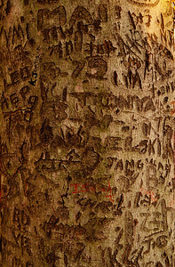 Theodore Roosevelt Island, Carving Tree (c) 2013 Karin Markert, all rights reserved.