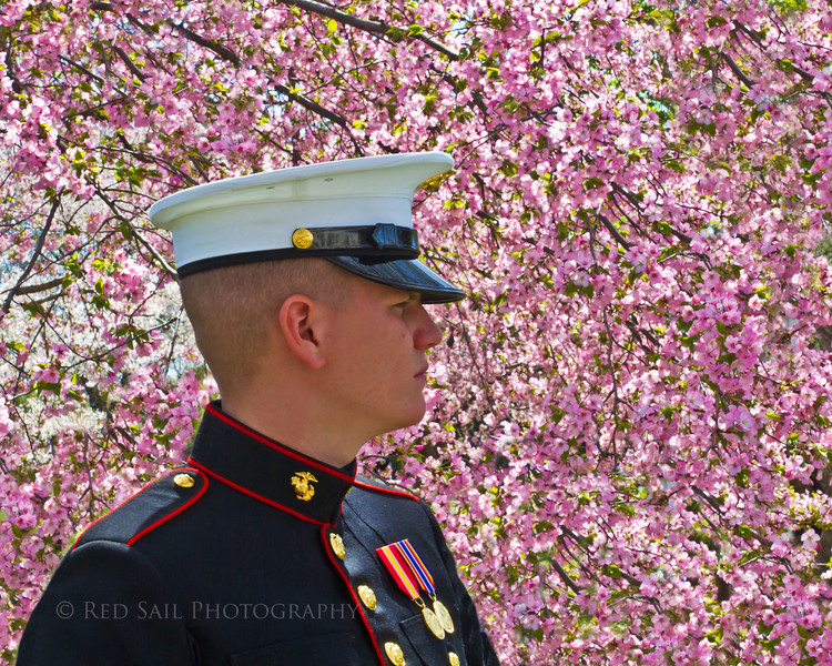 Marine with Washington Cherry Blossoms