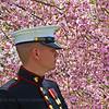 Marine with Washington Cherry Blossoms