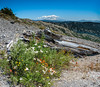 Mt. Adams from Mt. St. Helens