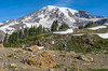 Above the meadows on Mt Rainier