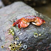 Beach Critter-0867