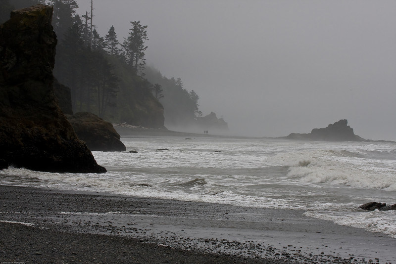 Beach Explorers-9683