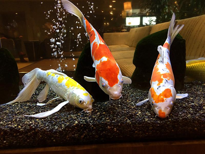 Fish at the Coeur d'Alene Resort in Idaho