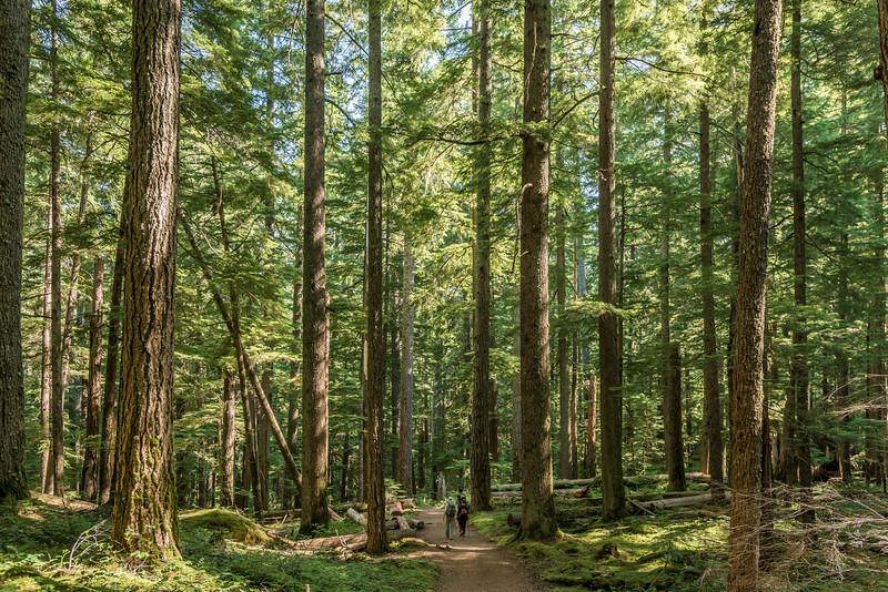 Dwarfed. Silver Falls Trail, Mount Rainier National Park