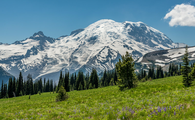 Mount Rainier from the meadows above Sunrise