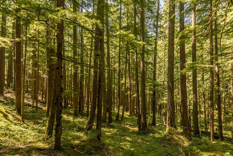 Silver Falls Trail, Mount Rainier National Park