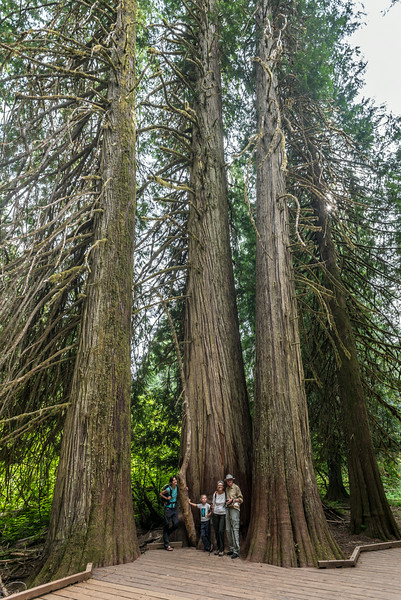 In the Grove of the Patriarchs. Mount Rainier National Park