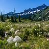 Bear grass (Xerophyllum tenax) in front of Unicorn Peak, Tatoosh Range. Snow Lake Trail, Mount Rainier National Park