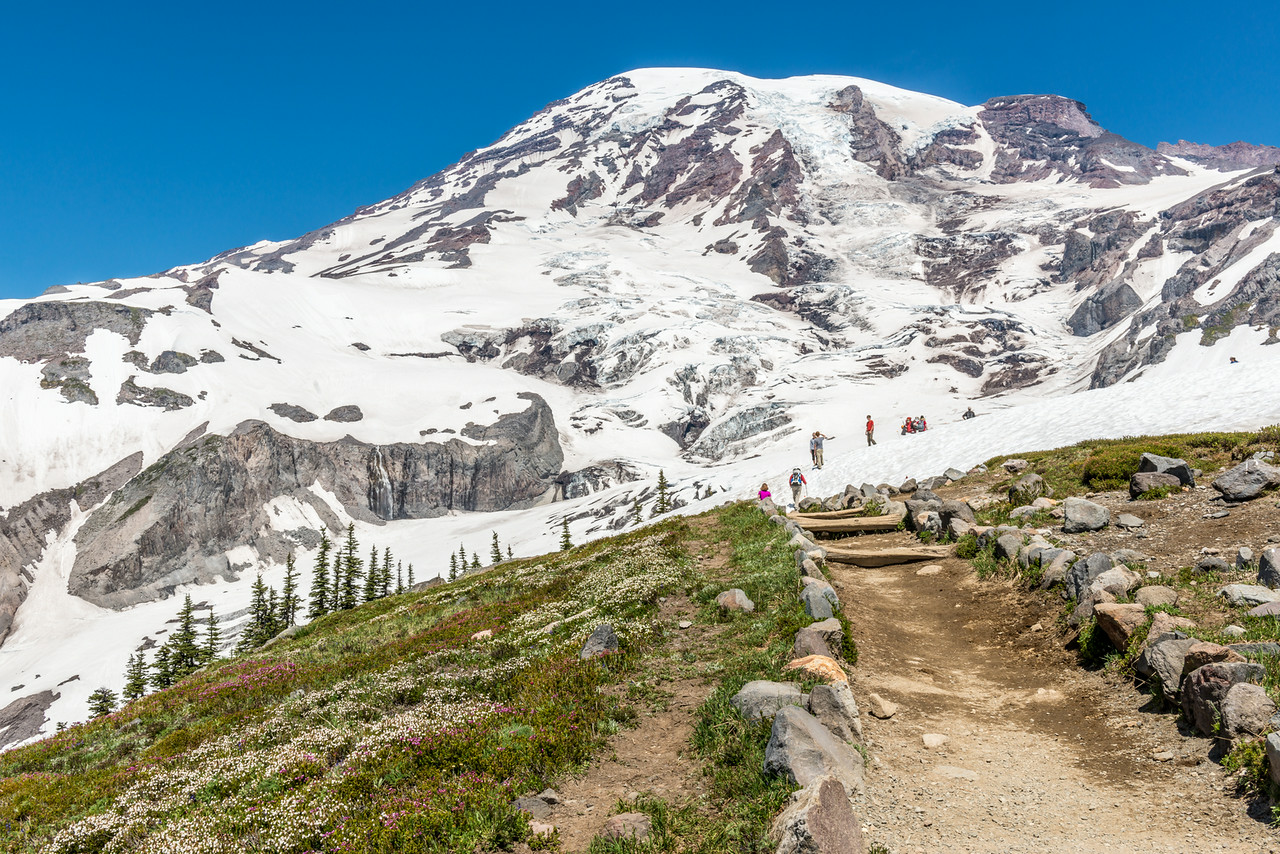 Mount Rainier (4392m) from Glacier Vista. Paradise, Mount Rainier National Park