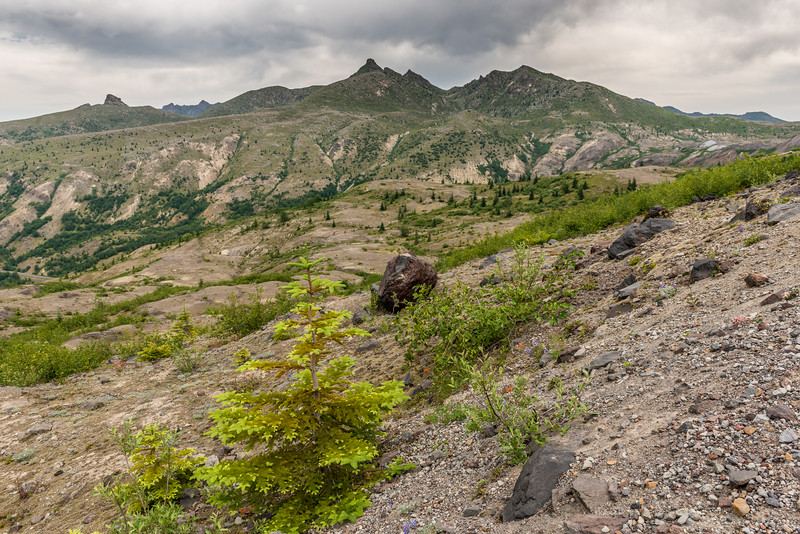View of the ridge-tops west of Coldwater Peak from Johnston Ridge, Mount Saint Helens National Volcanic Monument