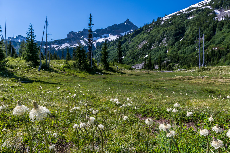 Bear grass (Xerophyllum tenax) in front of Unicorn Peak, Tatoosh Range. Snow Lake Trail, Mount Rainier National Park