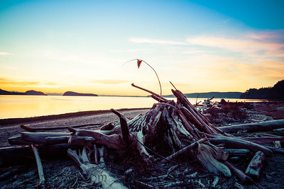 Driftwood piled on shore in morning light