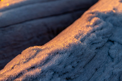 Wood covered in a hoar frost during sunrise