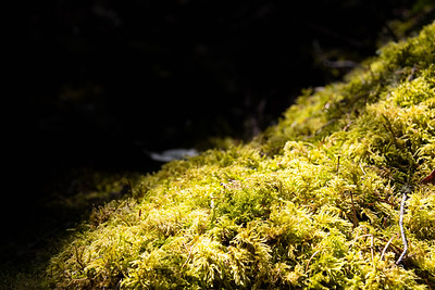 A detailed close-up image of green moss in sunlight