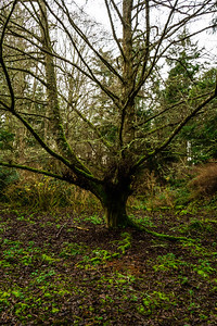 A bare tree covered in moss on a cloudy day