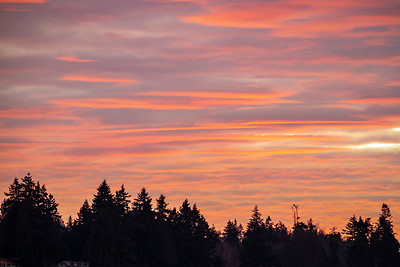 Brilliant Sunset over the Pacific Northwest with Evergreens in Silhouette with Yellow and Blue Tones.