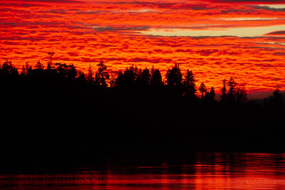 Brilliant Sunset over the Pacific Northwest with Evergreens in Silhouette