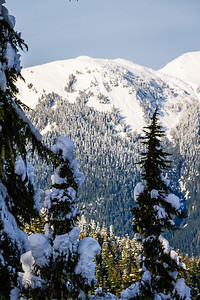 Distant snow covered mountains as seen through snow covered trees in the North Cascades