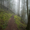 Twin Lakes Trail, near the summit and in the fog.