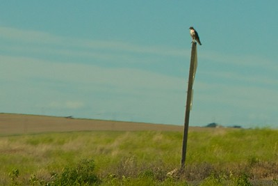 Bird on a post
