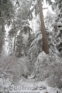 A snow covered trail through a forest