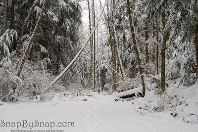 A snow covered trail through a winter wonderland forest