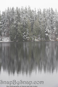 A forest of pine trees reflecting in a lake