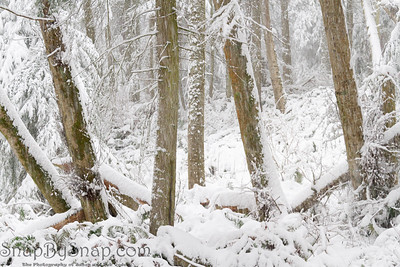 A forest covered in snow