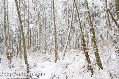 A winter wonderland in a snow covered forest