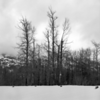 Trees, snow and clouds