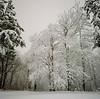 Snowy day, Mercer Island