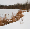 Cat tails and frozen lake