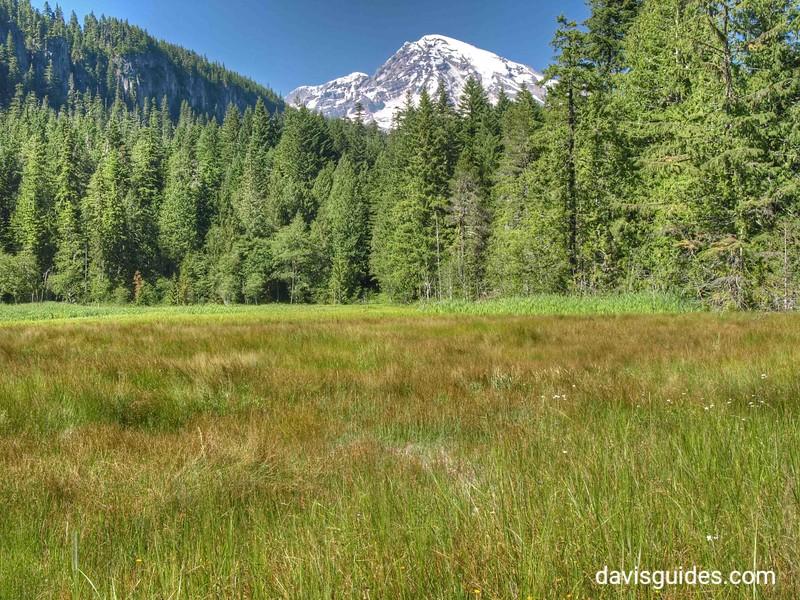 Mount Rainier from valley near Longmire