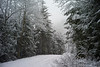 Snowy road, Olympic Peninsula