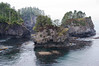 Cape Flattery in the fog 1